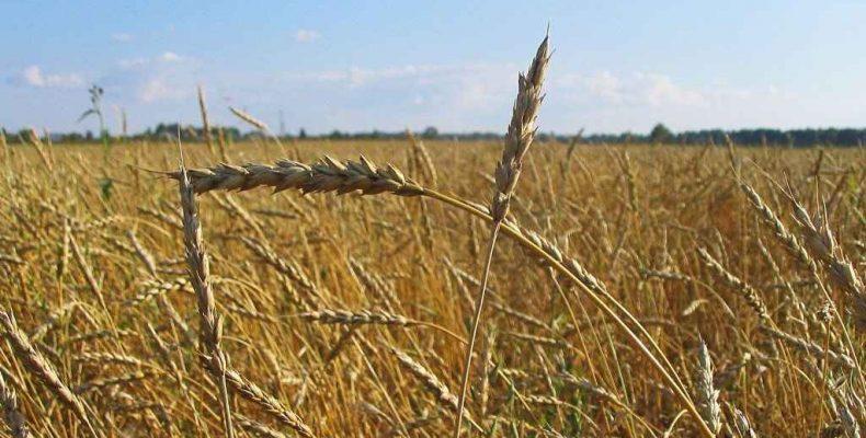 Как спасти урожай в трудных условиях