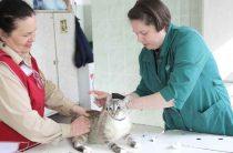 Доктор Айболит спешит на помощь